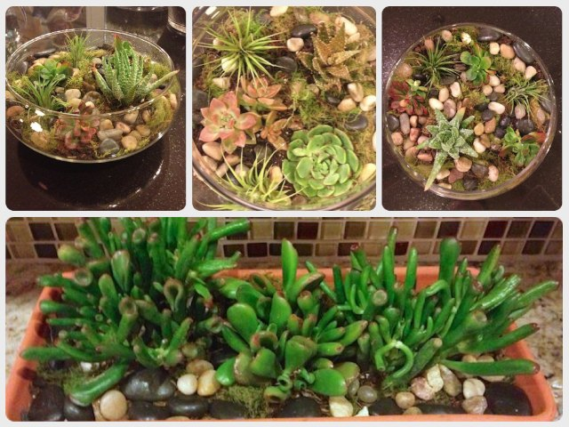 terrariums I planted